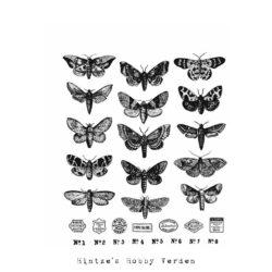 Tim Holtz Stempel – Moth Study